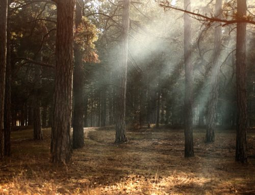 A Woodland Creation Story